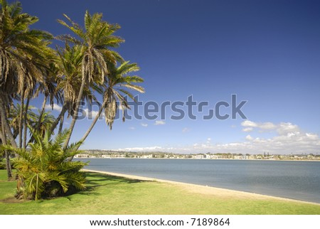 Palm trees at Mission Bay in San Diego - stock photo