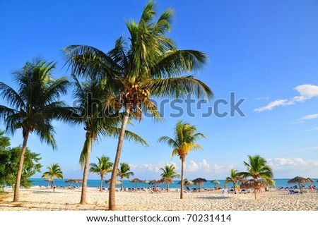 Palm trees at Paradise Beach