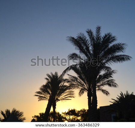Palm trees at sunrise at the Egypt resort - stock photo