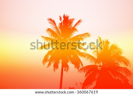 Palm trees at sunset - stock photo