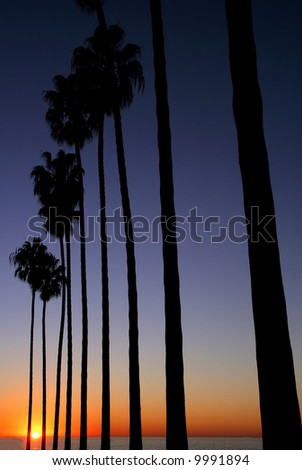 Palm trees at sunset by the sea - stock photo
