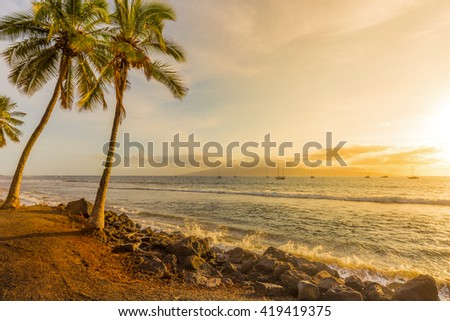 Palm Trees at Sunset on a Tropical Island at Golden Hour - stock photo