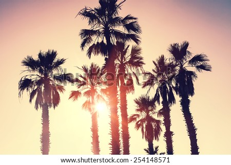 Palm trees at sunset. Vintage style photo - stock photo