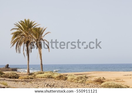 Palm trees at tenerife beach.. Fashion, travel, summer, vacation and tropical beach concept.