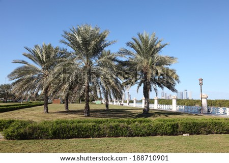 Palm Trees at the corniche in Abu Dhabi, United Arab Emirates
