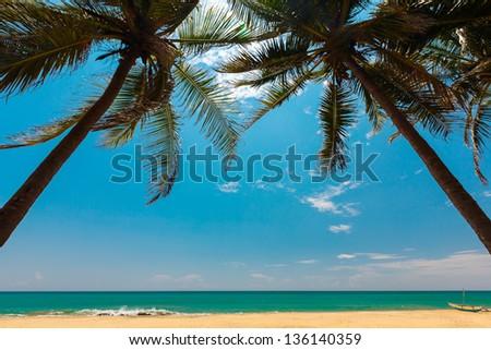 Palm trees at the tropical coast in Sri Lanka - stock photo