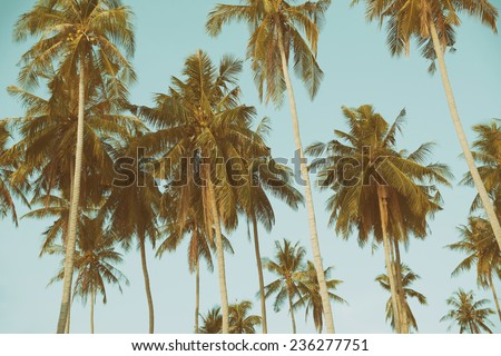 Palm trees at tropical coast, vintage toned - stock photo