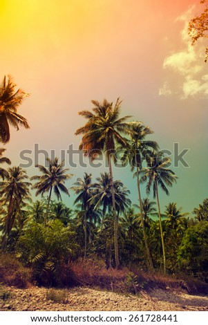 Palm trees at tropical coast. Vintage toned. - stock photo
