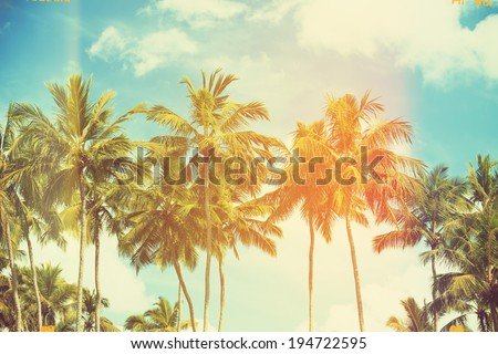 Palm trees at tropical coast, vintage toned and film stylized - stock photo