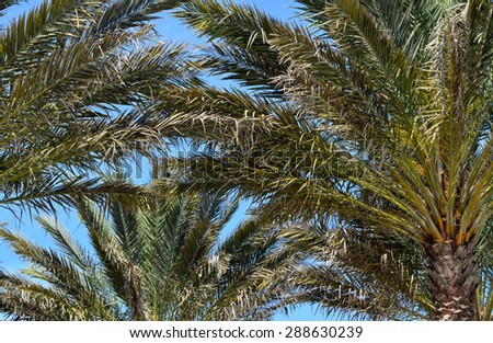 Palm trees background - stock photo