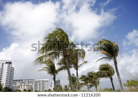 palm trees blowing in miami, florida