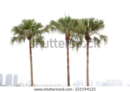 Palm trees by a resident district on white background - stock photo