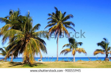 palm trees by the ocean