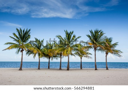 Palm Trees By The Ocean In Key Biscayne Florida