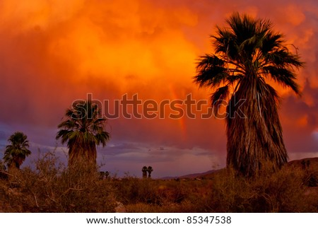 Palm trees, colorful clouds, and a rainbow. Palm Canyon campground in Anza-Borrego Desert State Park