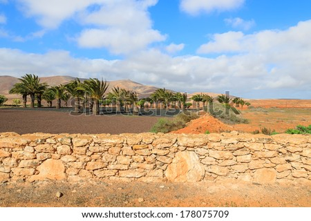 Palm trees countryside landscape of Antigua village, Fuerteventura, Canary Islands, Spain