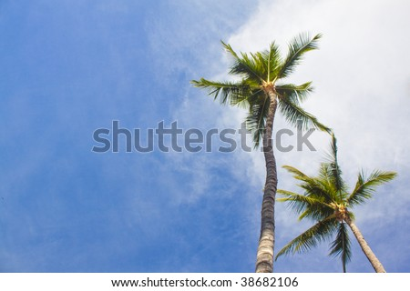 Palm trees from below - stock photo