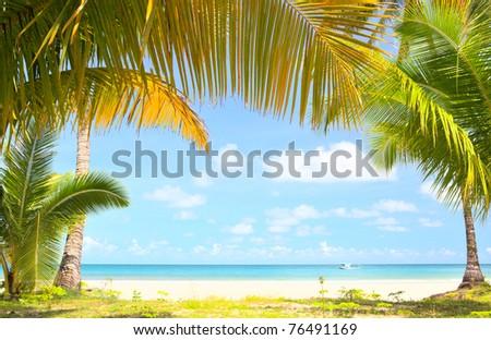 Palm trees gateway to beautiful beach - stock photo