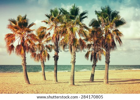 Palm trees grow on empty sandy beach in Spain. Vintage style. Photo with old style colorful retro tonal photo filter correction, instagram old style - stock photo