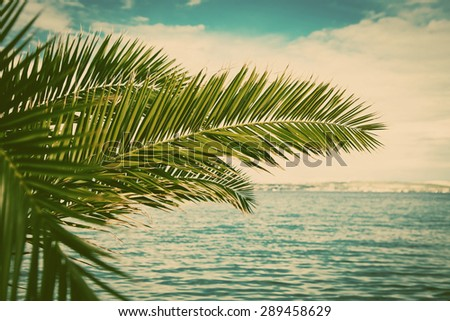 Palm trees - holiday concept - stock photo