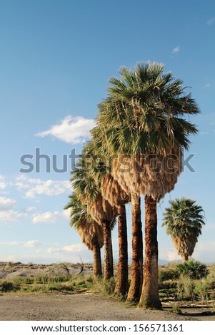 Palm trees in a row in a blue sky - stock photo