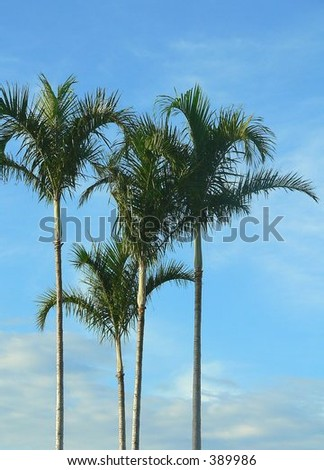 Palm Trees in bright early morning sunlight against a mostly blue sky