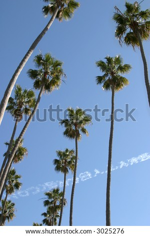 Palm trees in California