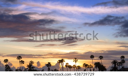 Palm trees in California beach during sunset.