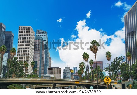 palm trees in Downtown Los Angeles, California