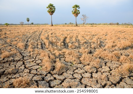 Palm trees in dry land