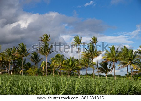 Palm trees in front of a cloudy sky