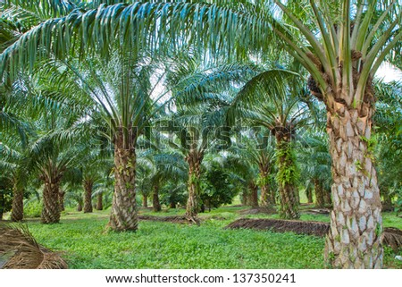 palm trees in garden.