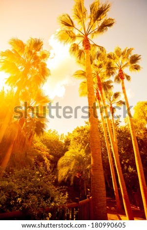 Palm trees in jungle on beautiful sunset - stock photo
