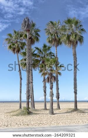 Palm Trees in Santa Monica - stock photo