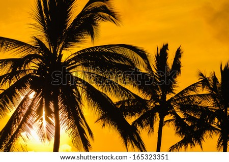 Palm trees in silhouette with the sun behind them, Maui, Hawaii, USA