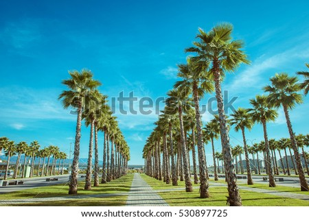 Palm trees in the city park