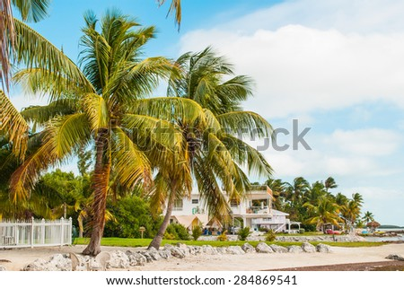 Palm Trees in the Florida Keys