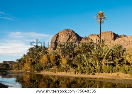 Palm trees in the oasis near Ouarzazate, Morocco - stock photo