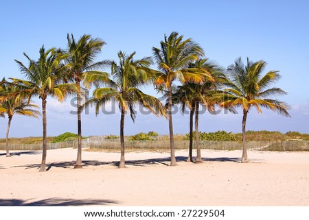 Palm trees in the row, Miami South Beach - stock photo