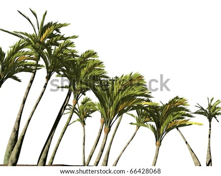 palm trees isolated - stock photo
