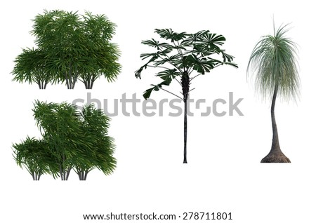 palm Trees iSolated Collection - stock photo