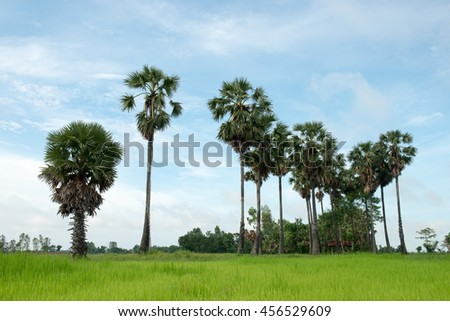 Palm trees landscape in Thailand. - stock photo