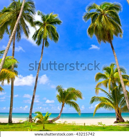 Palm trees near beautiful sea on white sand beach, blue sky and clouds - stock photo