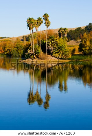 Palm trees next to a water in Napa Valley - stock photo