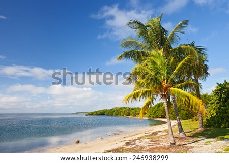 Palm trees, ocean and blue sky on a tropical beach in Florida keys near famous tourist destination Key West on a sunny summer day