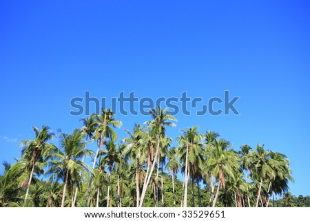 Palm Trees of Tropical Island.