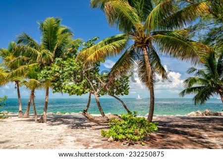 Palm trees on a beach. - stock photo