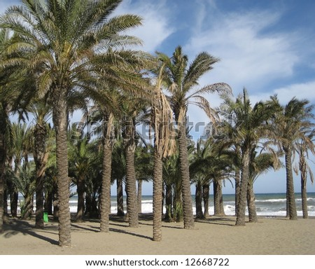 Palm Trees on a Beach in Torremolinos, Spain - stock photo