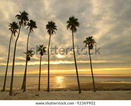Palm trees on a beach with golden sunlight