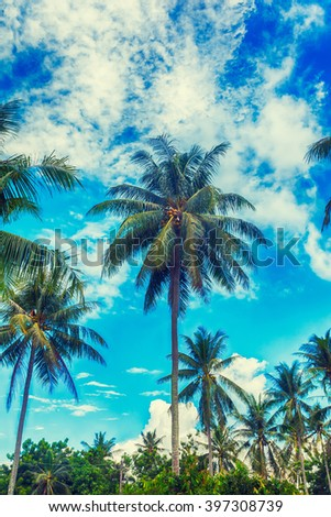 palm trees on a beautiful clouds on back  - stock photo
